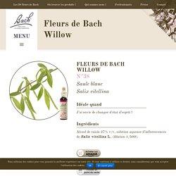 Fleur de Bach n°38 : Willow / Saule - Fiche d'information