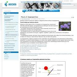 Fleurs d' Angiospermes