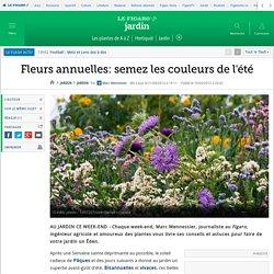 Fleurs annuelles: semez les couleurs de l'été