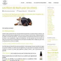 Les fleurs de Bach pour les chiens – Conseils en fleurs de Bach – Le Blog