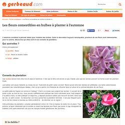 Fleurs comestibles - les bulbes d'automne