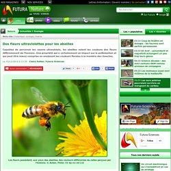 Des fleurs ultraviolettes pour les abeilles
