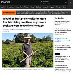 Would-be fruit picker calls for more flexible hiring practices as growers seek answers to worker shortage