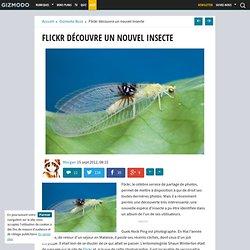 Flickr découvre un nouvel insecte