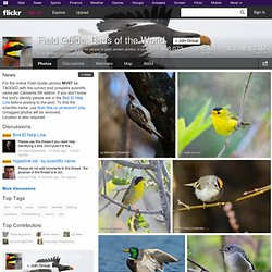 Field Guide: Birds of the World