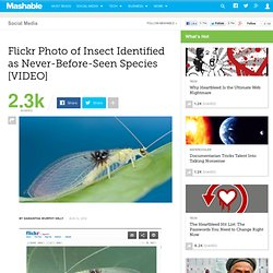 Flickr Photo of Insect Identified As Never-Before-Seen Species