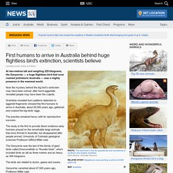 First humans to arrive in Australia behind huge flightless bird's extinction, scientists believe
