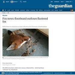 Fox news: floorboard outfoxes flustered fox | UK news