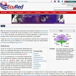 Flor - EcuRed