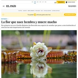 La flor que nace hembra y muere macho