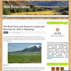 The Rich Flora and Fauna in Lands and Ranches for Sale in Wyoming