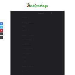 Floraison de l'olivier, pollinisation, récolte des olives