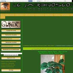jardins - Le JardinOscope, toute la flore et la faune de nos parcs et