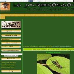 Les ichneumons, des insectes auxiliaires au jardin - Le JardinOscope, toute la vie animale de nos parcs et jardins