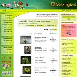 Recherche par familles, Plantes de la famille des Brassicaceae