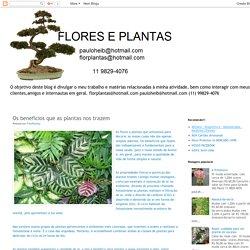 Flores & Plantas: Os benefícios que as plantas nos trazem