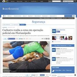 Cachorro rouba a cena em operação policial em Florianópolis
