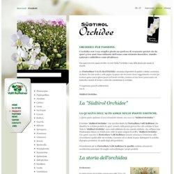 Südtirol Orchidee - Floricultura Bolzano / Alto Adige - Valtl Raffeiner