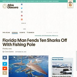 Florida Man Fends Ten Sharks Off With Fishing Pole