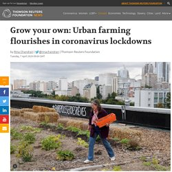 Grow your own: Urban farming flourishes in coronavirus lockdowns