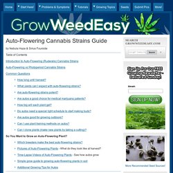 Auto-Flowering Cannabis Strains Guide (Plus How to Get Better Yields & Potency)