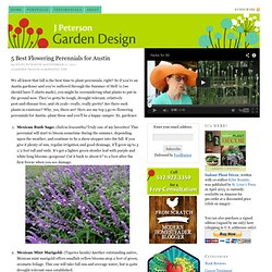5 Best Flowering Perennials for Austin — J Peterson Garden Design