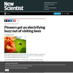 Flowers get an electrifying buzz out of visiting bees