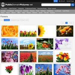 Flowers Public Domain Pictures - Free Stock Photos - Page 1