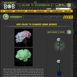 Add Color To Flowers Using Science - ScienceBob.com