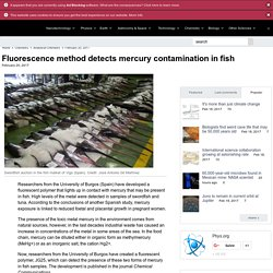 PHYS_ORG 20/02/17 Fluorescence method detects mercury contamination in fish