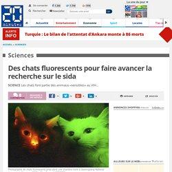 Des chats fluorescents pour faire avancer la recherche sur le sida