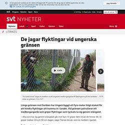 De jagar flyktingar vid ungerska gränsen