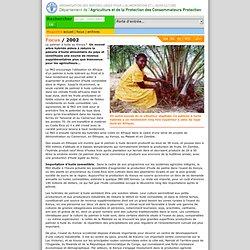 2002 - Le palmier à huile au Kenya
