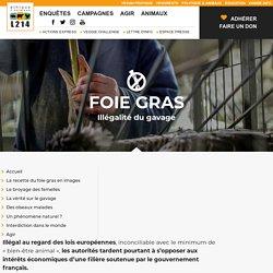 Foie gras : Illégalité du gavage