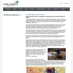 Track Wildlife - Followit - Tellus GPS collars on Wolf in Alaska
