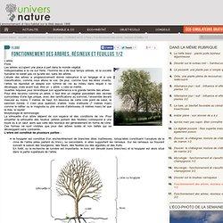 Fonctionnement des arbres, résineux et feuillus