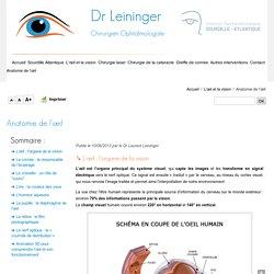 Anatomie et fonctionnement de l'œil