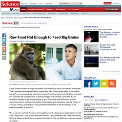 Raw Food Not Enough to Feed Big Brains