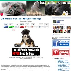 List Of Foods You Should NEVER Feed To Dogs - Lovable Friends