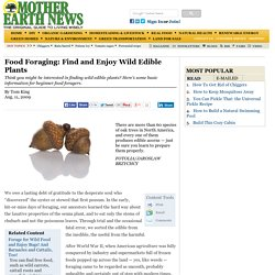 Food Foraging: Find and Enjoy Wild Edible Plants