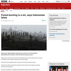 Forest-burning is a sin, says Indonesian fatwa