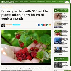 Forest garden with 500 edible plants takes a few hours of work a month