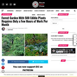Forest Garden With 500 Edible Plants Requires Only a Few Hours of Work Per Month