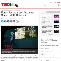Forest for the trees: Suzanne Simard at TEDSummit