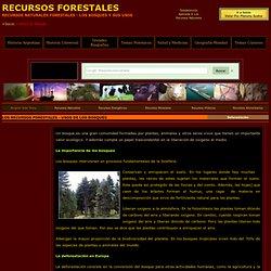 Recursos Forestales Los Bosques Deforestacion Recursos Naturales