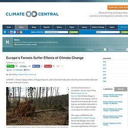 Europe's Forests Suffer Effects of Climate Change