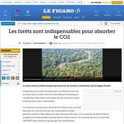 Environnement : Les forêts sont indispensables pour absorber le CO2
