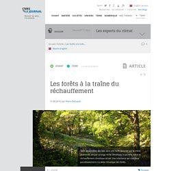 CNRS LE JOURNAL 31/08/16 Les forêts à la traîne du réchauffement