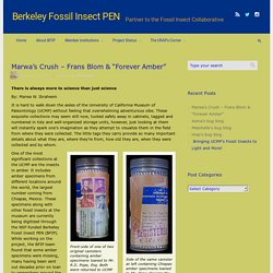"Marwa's Crush – Frans Blom & ""Forever Amber"" – Berkeley Fossil Insect PEN"
