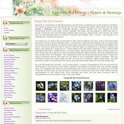 Forget Me Not Flower Pictures & Meanings